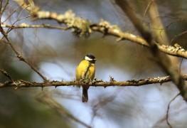 Comment attirer les oiseaux dans votre jardin
