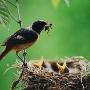 2 friandises maison pour les oiseaux