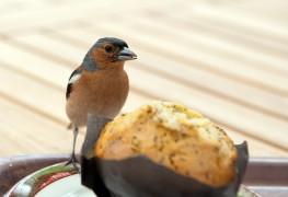 Muffins pour oiseaux, friandises pour canaris et passereaux, faits maison