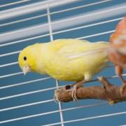Que faire pour avoir un oiseau de compagnie heureux