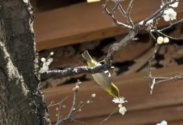 3 gâteries pour les oiseaux sauvages