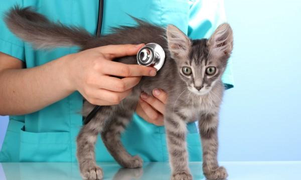 4 raisons de dire «oui» aux produits d'assurance pour animaux