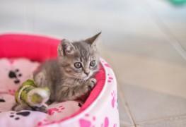 3 conseils pour soigner un chat avec une fracture