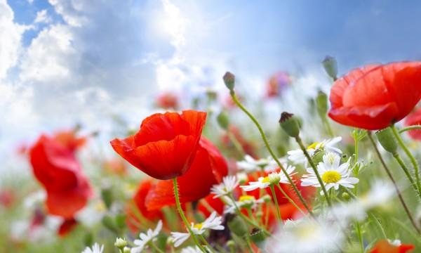 Conseils de jardinage de loisir conomique trucs pratiques for Conseil de jardinage