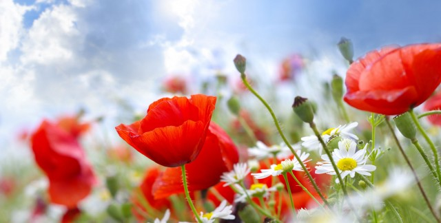 Conseils de jardinagede loisir économique