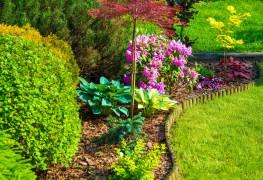 7 idées d'entretien de la pelouse faciles et abordables