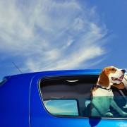 Comment éliminer les poils de chien sur les tissus de voiture