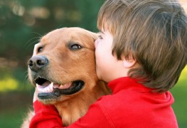Que faire si votre chien a mauvaise haleine?