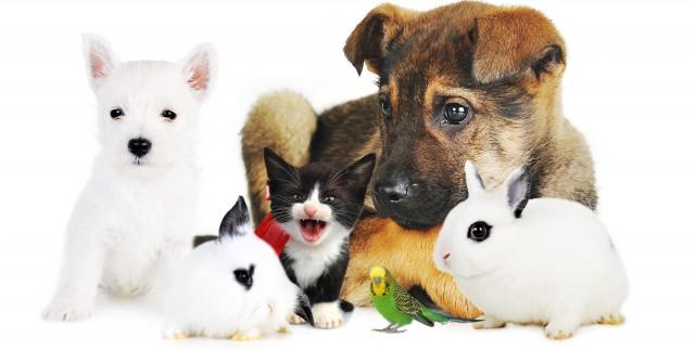 Conseils pourchoisir un animal de compagnie