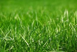 4 façons professionnelles de garder une pelouse sans soins