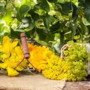 4 remèdes naturels pour la congestioncérébrale
