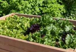 Conseils pourla culture des légumes frais enconteneurs