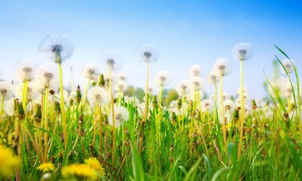 Conseils d'expert pour contrôler les mauvaises herbes