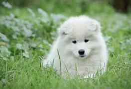 Premiers soinspour votre pelouse: taches d'urine de chien