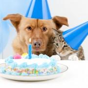 Astuces et friandises maison pour votre chien
