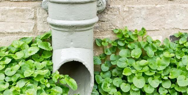 Un meilleur jardin commence par un meilleur drainage du sol