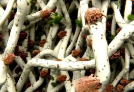 Conseils pour se débarrasser des mites, des anthrènes detapis et des acariens
