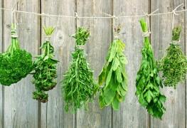 10 fines herbes pour ajouter du goût à vos plats