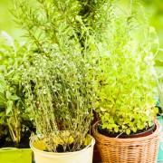 Comment utiliser les 14 herbes les plus courantes