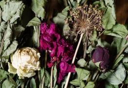 4 méthodes infaillibles pour sécher des fleurs