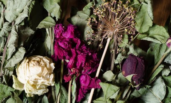 4 Methodes Infaillibles Pour Secher Des Fleurs Trucs Pratiques