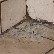 Conseils pour lutter contre la moisissure au sous-sol