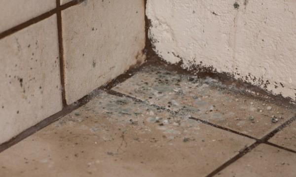 conseils pour lutter contre la moisissure au sous sol trucs pratiques. Black Bedroom Furniture Sets. Home Design Ideas