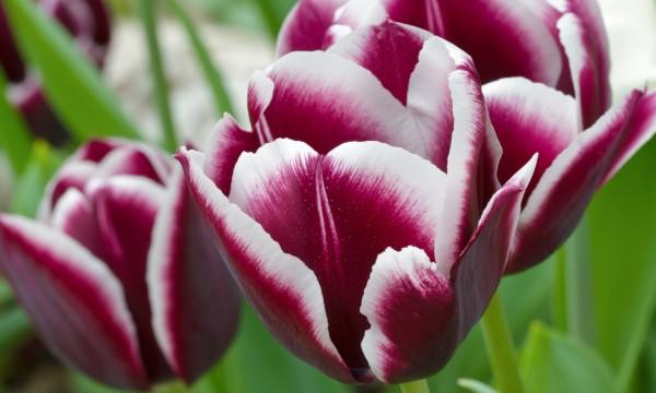 comment planter et prendre soin des bulbes de fleurs trucs pratiques. Black Bedroom Furniture Sets. Home Design Ideas