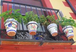 Quelques conseils utiles pour garder les pots de fleurs et les vases propres