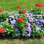 Choisirle bon moment pourcouper et pourplanterdes fleurs