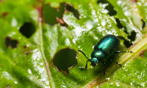 Lutte contre les insectes dans le jardin et sur votre peau - Insecte vert volant ...