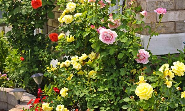 Protéger sa plomberie de son jardin en 4 étapes