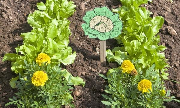 5 astuces pour un sol de jardin plus sain et plus riche
