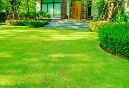 7 trucs pour avoir une belle pelouse