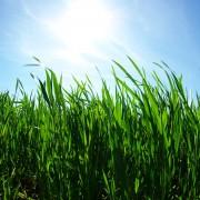 9 solutions d'experts pour vos problèmes de pelouse