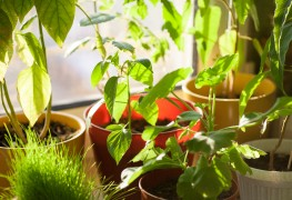 8 astuces simples pour garder vos plantes d'intérieur en bonne santé