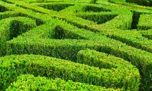 Comment prendre soin de vos haies de jardin