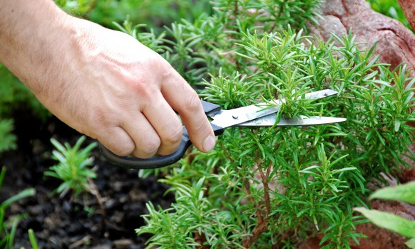 Planter et récolter des fines herbes en 6 étapes faciles