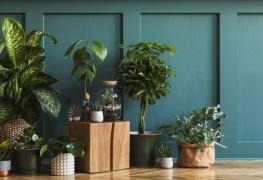 7 façons dont les plantes d'intérieur sont bonnes pour la santé