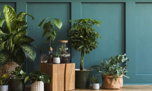 7 raisons pour lesquelles les plantes d'intérieur sont bonnes pour la santé