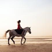Trouver des vacances d'équitation qui vous conviennent