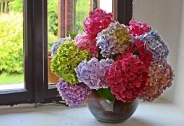 La beauté délicate des bouquets d'hortensias