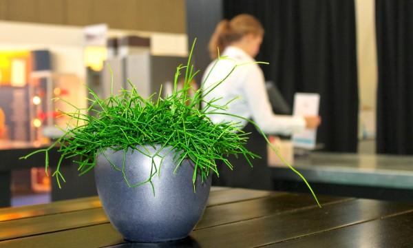 Vos plantes d'intérieur ont aussi besoin d'amour
