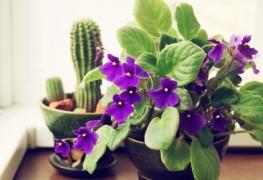 6 étapes simples pour nettoyer les plantes d'intérieur