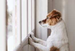 Comment laisser les animaux seuls à la maison