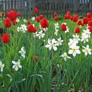 10 belles fleurs printanières qui ajoutent de la couleur à votre jardin
