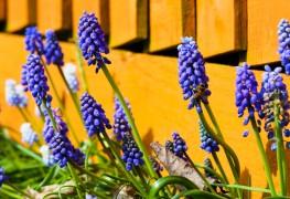 Bulbes sans entretien: des bulbes aux fleurs dans votre jardin