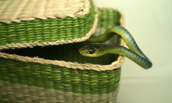 Comment éloigner les serpents de votre campement