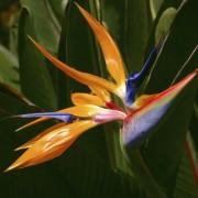 Découvrez les compositions de fleurs tropicales