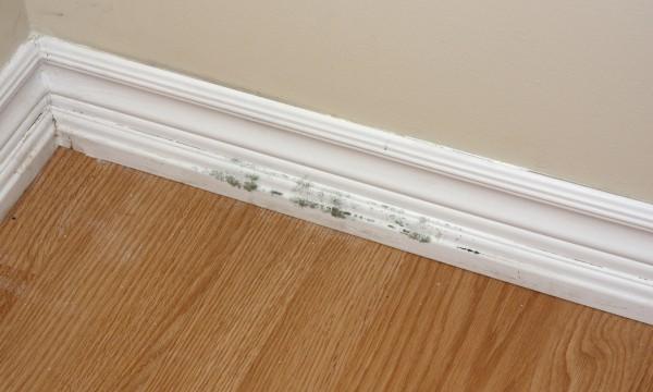 Les principales causes de moisissure dans votre maison trucs pratiques - Moisissure maison ...